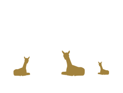 Pinnacle Alpacas