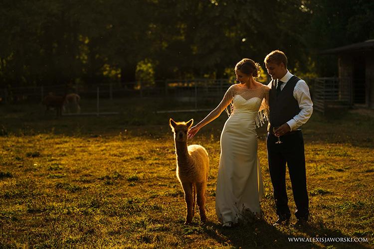 Pinnacle Alpaca Weddings: bride and groom