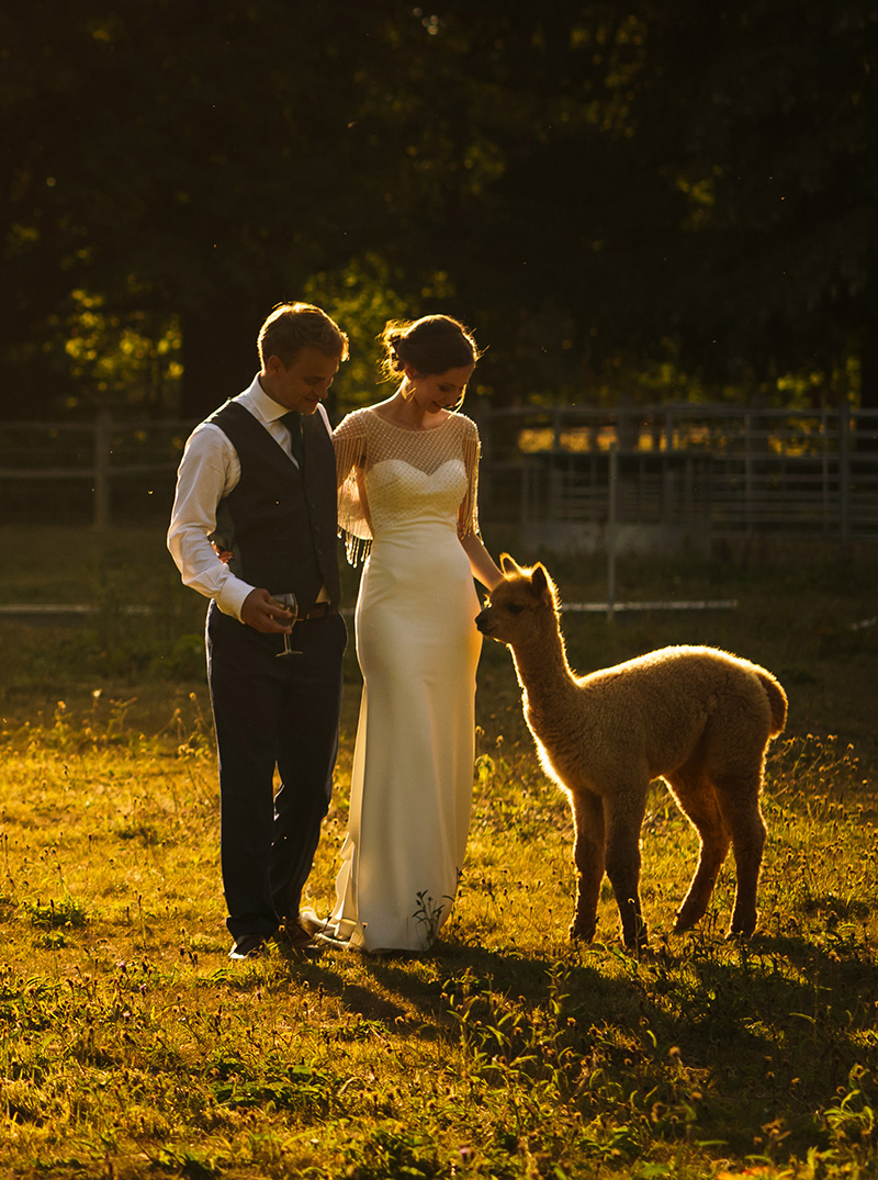 The happy couple are greeted by our alpaca