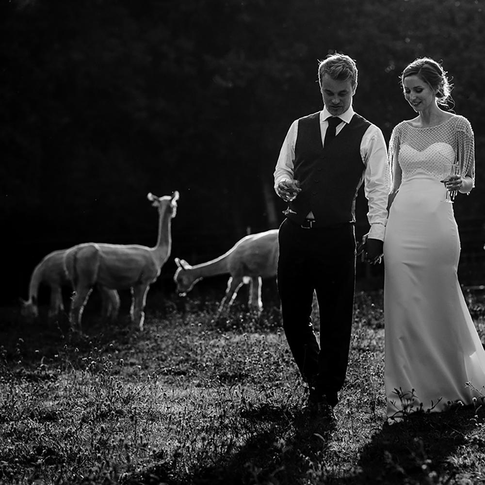 Alpaca Weddings